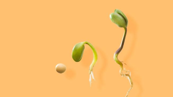Novas sementes para o futuro da humanidade